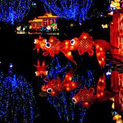 Goldfish at Chinese Lantern Festival (JC Loves U) Tags: festival night lights dallas december goldfish chinese coloredlights lantern