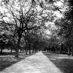 Film: The Road (rafa.esteve) Tags: ilfordfp4plus125 mediumformat 1x1 valencia blackandwhite blackwhite road park