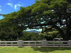 A view of Diamond Head through the trees from the Honolulu Museum of Art Spalding House (Kanalu Chock) Tags: museum honolulu hawaii art contemporary