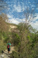 DSC03176 (Braulio Gmez) Tags: barrancadehuentitn biodiversidad caminoamascuala canyon canyonhuentitan faunayflora floresyplantas guadalajara jalisco mountainrange naturaleza sierra senderismo paisaje barrancadehuentitn barranca huentitn ixtlahuacandelro mxico guardianesdelabarranca