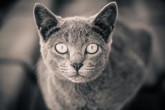 A little cat... (Fe_Lima) Tags: cat beauty beautiful lovely light shallowdof bw blackandwhite pretoebranco pb nikon d7100 nikond7100 nikonafsnikkor50mmf18g nikon50mm18g nikonf18g dof