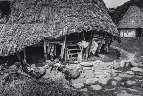 Daily Life Scene at Wae Rebo, Flores