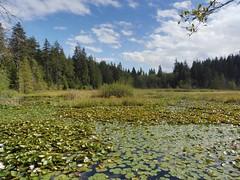 "Beaver Lake or ""Where is the lake?"" Lake - 2016-08-21 (4nitsirk) Tags: vancouver lake stanleypark 365"
