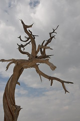 Old Tree (ihabassaad) Tags: old tree abha sky nikond7000 nikon     outdoor