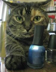 Momo the manicurist (elycefeliz) Tags: cat gato katze momo