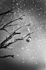 the stars collector (Sergio Busà) Tags: bokeh natura nature star stars stella stelle notte nigt sergiobusà bn bw biancoenero bianconero nikon d800 nikond800 summer estate collezionista collector monocromo astratto trama allaperto minimalismo boken