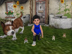 Puppies! (Zaidon Resident) Tags: fli boy dura acorn jian toddleedoo secondlife sneakers sky shoes shirt fashion fit photographer photo photography photooftheday photograpy pictures people pc pose poses dollface dope designer doggy doggies duckies animals landscape flowers grass gaming gamer boys blogger blogging blue babies cottage cute