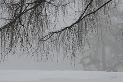 1750 m (Elysium 2010) Tags: fog april snowfall valais