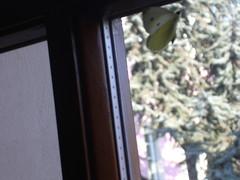 Omaggio a Tonino Guerra (vincenzo552012) Tags: auto roof macro dogs del bokeh picture e fiori amici sono miei tutti depoca mondo on italiane naturalmente giulianova i flickrit youselfthrough