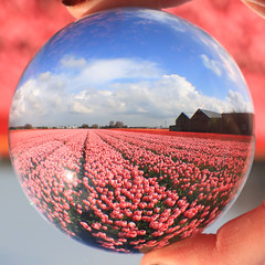 KG7A8967 (cwhilbun) Tags: flowers blue sky holland tree water netherlands windmill grass clouds tulips refraction hyacinth keukenhof crystalball vibrance lisse bollenstreek tulipfields crystalsphere bloembollen sassenheim