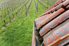 Dach im Weinberg (p4rkh4us) Tags: dach weinberg weinstadt strmpfelbach