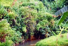 Sri Lanka , talawakelle , rivière (pontfire) Tags: srilanka srilankan voyageausrilanka srilankatrips srilankalandscape paysagedusrilanka ceylontea théceylan srilankatea thédusrilanka srilankamoutain montagnedusrilanka talawakelle tea somerset dambagastalawa river rivière eau water moutain montagne thé ceylon ceylan landscape paysage asie asia asian earth nature natural tree arbre pontfire lankan sri lankā śri lanka çri śrī laṅkā ශ්රී ලංකා illankai இலங்கை