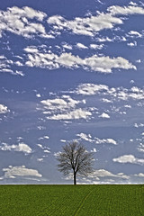 Lonesome Tree (L I C H T B I L D E R) Tags: sky tree field clouds germany spring feld himmel wolken baum singletree dorp frhling linde lonesometree tiliaplatyphyllos flickraward sommerlinde flickraward5