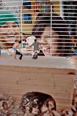304 - Belittled (jacens0l0) Tags: giant trapped small cage caged tiny shrunken giantess gts shrink shrinking shrunk smallman tinyman shrunkenman haydenpanettiere entrapped hamstercage selenagomez shrinkingman ensared