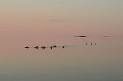 Fleuve St-Laurent, Trois-Pistoles, Qc (Fransois) Tags: qubec serenity qc kayaks stlawrenceriver troispistoles srnit fleuvestlaurent kayakistes bestcapturesaoi