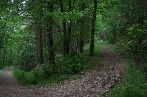 Gertrude canniog;s choice of paths, Inveraray woods