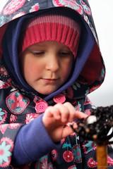 20120610-69-Sophia looking at seaweed (Roger T Wong) Tags: pink portrait seaweed girl nationalpark purple australia kelp tasmania np raincoat sophia tessellatedpavement tasmanpeninsula canonef24105mmf4lisusm canon24105 durvillaeaantarctica tasmannationalpark canoneos5dmarkii