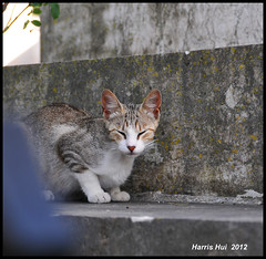 Stray Cats in Lisbon Cemetery Need Your Help - Lisbon N9174e (Harris Hui (in