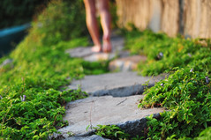 Off The Beaten Path (sarahtanml) Tags: feet nature greenery steppingstones greenplants offthebeatentrack lushfoliage sunsetlit