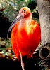 The Phoenix Rises (Photography-by-FRAZER) Tags: bird portugal nature zoo bright wildlife flamingo pheonix