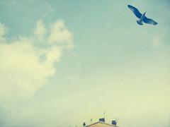. (Catherine...) Tags: blue sky clouds nice pastel seagull bleu ciel nuages couleur mouette artlibre