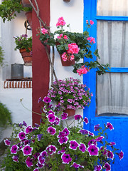 Patio cordobs P5090579 (Rafael Jimnez) Tags: flores flower crdoba patios cordobaespaa aboutiberia