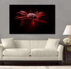 Stunning Beauty Red (Simply Canvas Art) Tags: art wallart flowerart homedecoration flowerprints flowercanvas flowerwallart flowercanvasprints flowercanvasart flowercanvaswallart