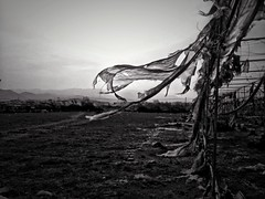 Dancing with the wind (Carmen Cabrera (tSfruit)) Tags: photography app 3gs apps iphone mobileshot mobileart mobilephotography iphonephoto iphonography iphoneart iphoneshot iphoneography iphoneographer iphoneartwork iphonographer editedoniphone iphone3gs carmencabrera carmencabreraiphoneography carmencabreraphotography