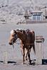 Horse at bromo (joeziz EK pholrojpanya) Tags: travel sea bali beach nature indonesia landscape island volcano photo artist image images getty uluwatu picks tanalot fototrove