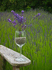 Cheers to Lavender! (1bluecanoe) Tags: lavender sequim wa wineglass 2012 1bluecanoe driedlavender