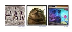 Ham, cat, Catt (Nolan Caudill) Tags: parallelogram haystacktriptychs