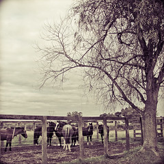 Cavalos (Tadeu e Suelen) Tags: horse brasil canon suelen rs cavalo riograndedosul bagé tadeu surodrigues jtadeu suelenetadeu mygearandme tadeuesuelen oitadeu
