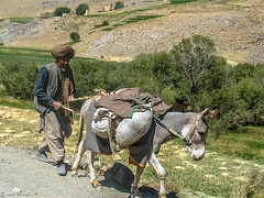 A Man and His Donkey | Behsud