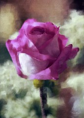 A Summer Rose (DigiDi) Tags: painterly rose digitalpainting reference coth painterlytexture theawardtree digiditexture mytexturing