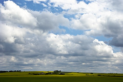 Land of the Living Skies (madlyinlovewithlife) Tags: light sky clouds big farm fields bigsky farms prairie saskatchewan prairies canola landoflivingskies prairiesky prairieskies canolafields livingskies canadianprairies landofthelivingskies livingskiesoftheprairies