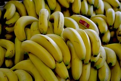 Apple Bananas (bmasdeu) Tags: banana fruit food produce fruitstand florida yellow ripe