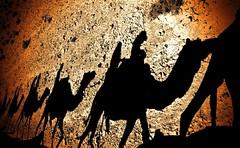 Camels-Caravan - Negev-Desert - Israel (Lior. L) Tags: travel israel desert silhouettes caravan negev camels negevdesert camelscaravannegevdesertisrael