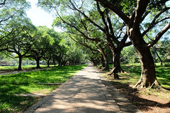 sunny greens (_cherylh) Tags: travel taiwan taichung trees path outdoor university campus sun light shadows nature landscape greenery fujifilm road tree plant