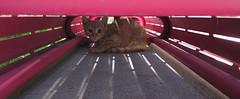My New Friend at Grand Park (Robb Wilson) Tags: orangetabby tabbykitten cat kitten grandpark downtownla losangeles bench kittenhiding