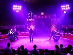 El Circo (19) (calafellvalo) Tags: circocircuscirquezirkusclownspayasosemocionesfantasiamagiacalafelvalo raluy circo zirkus sufrir suspirar fantasa fantasy sigh sueos dreams trume rves circoraluy suspense miedo fear trepidation circus cirque equilibrios payasos clowns trapecistas trapze trapez emociones emotionen emotions passions angst sentimirntos feelings feel affect risas lacht lache laughs mirth merriment magia magie magic calafellvalo art