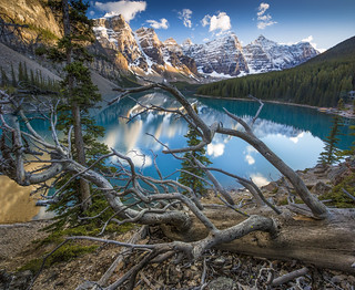 Banff Canada - Moraine Lake Tree
