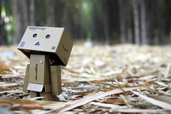 Daydreaming (fahrezialwi) Tags: danbo danboard toy toys toyphotography forest bamboo box figure amazon revoltech