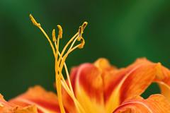 Balanchine (aleadam) Tags: flower closeup stamen choreography orange green contrast detail