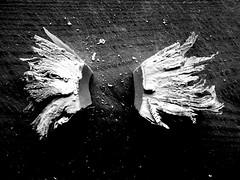 shape of a story (Ines Seidel) Tags: paper altered book alteredbook shape gestalt pattern bw wings angel story apart papier buch zerschneiden flgel geschichte getrennt