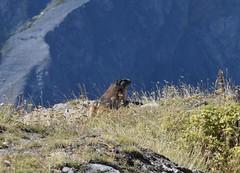 DSC_0044web (pedrop61) Tags: trekking natura bianco valdaosta