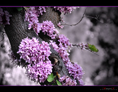 (aniribe) Tags: tree nikon mygearandme