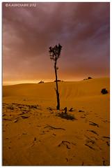 (A.Alwosaibie) Tags: trees light sunset sky clouds photo nikon desert horizon spot spotlight sands f4 2012 ksa 1635mm d90 alhasa alahsa aalwosaibie nikon1635mm