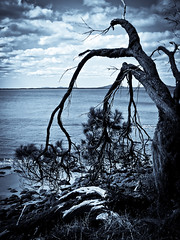 Tasmanian Beach (Phil Steere) Tags: sea sky holiday tree beach photo phil sydney australia tasmania fujifilm 2009 steere