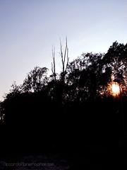 Through The Black (ManieroRiccardo) Tags: park trees sunset sun black forest tramonto sundown profile sole decline profilo