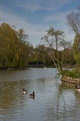 DSC_1975 (Gary Devlin) Tags: park england lake water pond nikon cleveland north ducks east stockton tees d90 ropner wwwgarydevlinphotographycouk